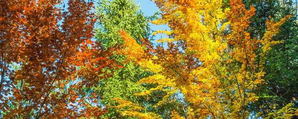 Autumn clear day in autumn forest. A bright color palette in the autumn forest.