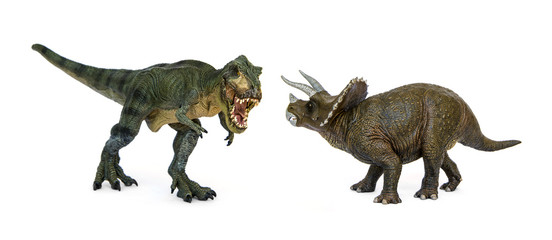 Battle of dinosaurs of Cretaceous. Shooting Hunt and Roaring of Tyrannosaurus(T-rex) With threat and self defense of Triceratops. Isolated on white background.