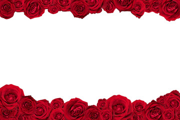 Frame made of red roses. Isolated on white.