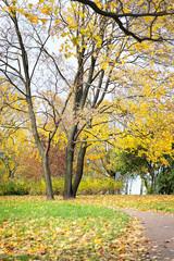 Autumn, fall landscape. Orange, colorful foliage