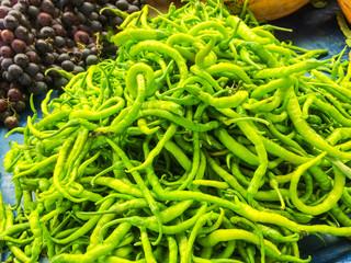 chili pepper plant