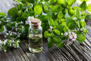 Fototapeta A bottle of oregano essential oil with blooming oregano twigs obraz