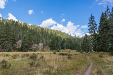 Trail through the Jemez Forest