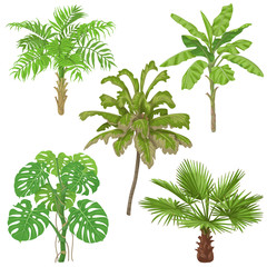 Tropical Plants Isolated