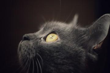 Olhar de Gato
