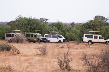 Samburu, Kenya - September 7, 2016: Tourists in a safari jeep firing a lioness lying near the road