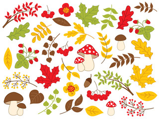 Vector Autumn Forest Set with Various Plants