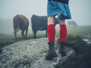 Woman in red socks hiking by cows