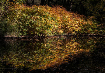 colorful red and yellow autumn trees reflecting in the water