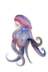 watercolor octopus