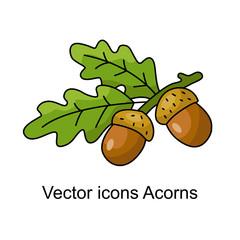 Icon of acorns.