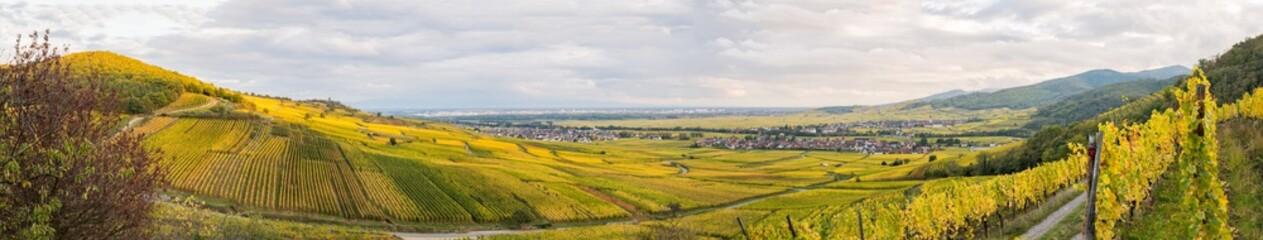 Vignoble alsacien à l'automne, Ammerschwihr, Kientzheim, KaysersbergVignoble, Sigolsheim, Alsace, Grand Est, France