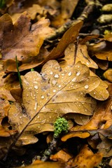Leafs and Waterdrops
