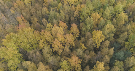 Aerial shot of autumn trees in forest in october