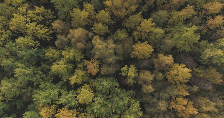 Aerial top view shot of autumn trees in forest in october