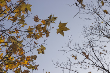 Autumn backgound