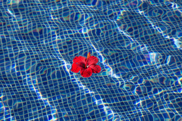 Tropical hibiscus flower in water
