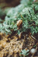 Beautiful little snail on green grass