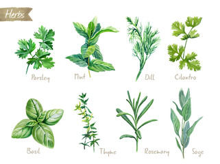 Photo sur Toile Condiment Culinary herbs collection watercolor illustration with clipping paths