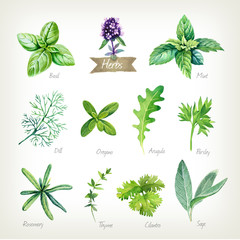 Culinary herbs collection watercolor illustration with clipping paths