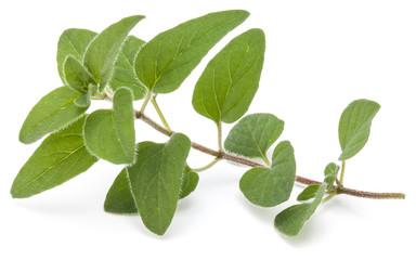 Fototapete - Oregano or marjoram leaves isolated on white background cutout
