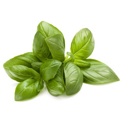 Fototapete - Sweet basil herb leaves bunch isolated on white background