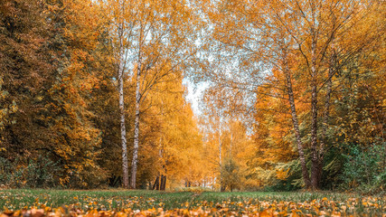 Autumn forest. Beautiful background, park in bright leaves. Road in the forest on a sunny afternoon. Green and orange nature background after the rain. The road is strewn with leaves of green grass.