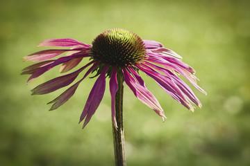 last flower before winter