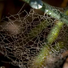 spidersweb1