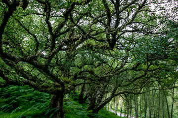 Baum in den Highlands