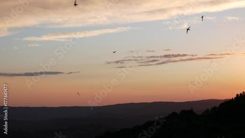 Volo Di Rondini Nel Cielo Al Tramonto In Toscana Stock Footage And