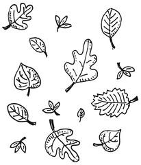 Autumn/fall - leaf drawing