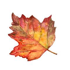 Beautiful red autumn leaf