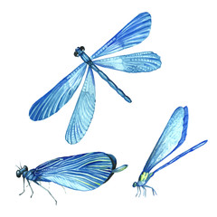 Set of dragonflies in watercolor