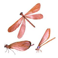 Set of dragonflies in watercolor