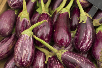 Fresh eggplants on the market - Solanum melongena