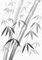Bamboo watercolor painting with two stalks and light leaves. Black gouache on white paper study.