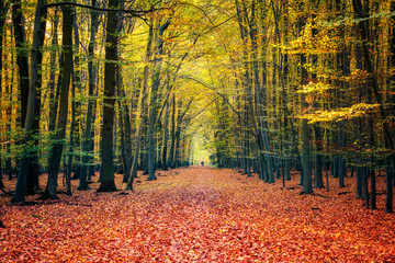 Wall Murals Road in forest Pathway in the bright autumn forest