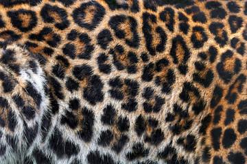 Wall Mural - Leopard skin texture