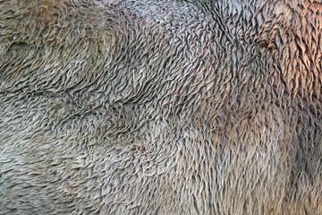 Wall Mural - Camel fur texture