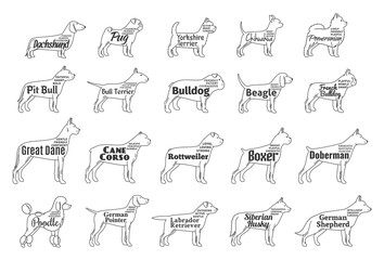 Vector dog icons collection isolated on white. Dogs breeds names and personality description