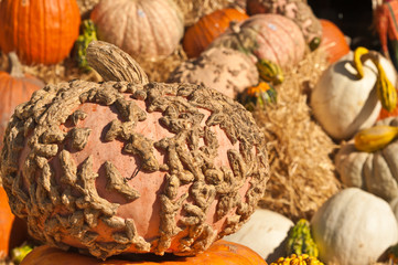 Variety of colored pumpkins, squashes, and gourd on a bail of hay for sale at an Octoberfest display