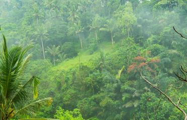Foggy Jungle Bali, Indonesia