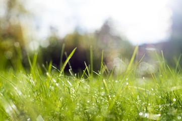 Green grass under rays of sun.