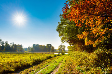 Landscape in autumn with trees, meadows and bright sun