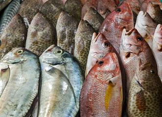 raw fish on ice at street market