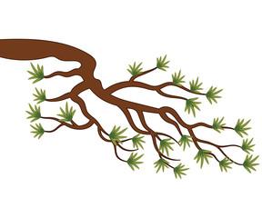 Vector Pine Tree Branch