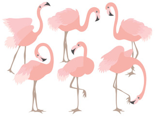 Vector Set of Beautiful Coral Flamingos