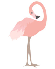 Vector Beautiful Coral Flamingo