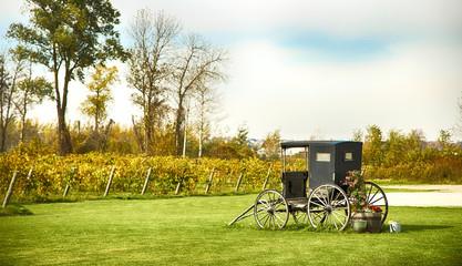 Autumn landscape of vineyard, nature background